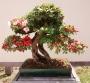 2 Bonsai Trees For No GoodReason