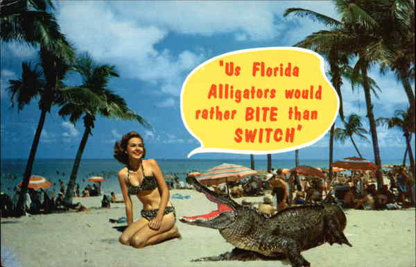 Us Florida Alligators would rather Bite than Switch - Fun in Florida